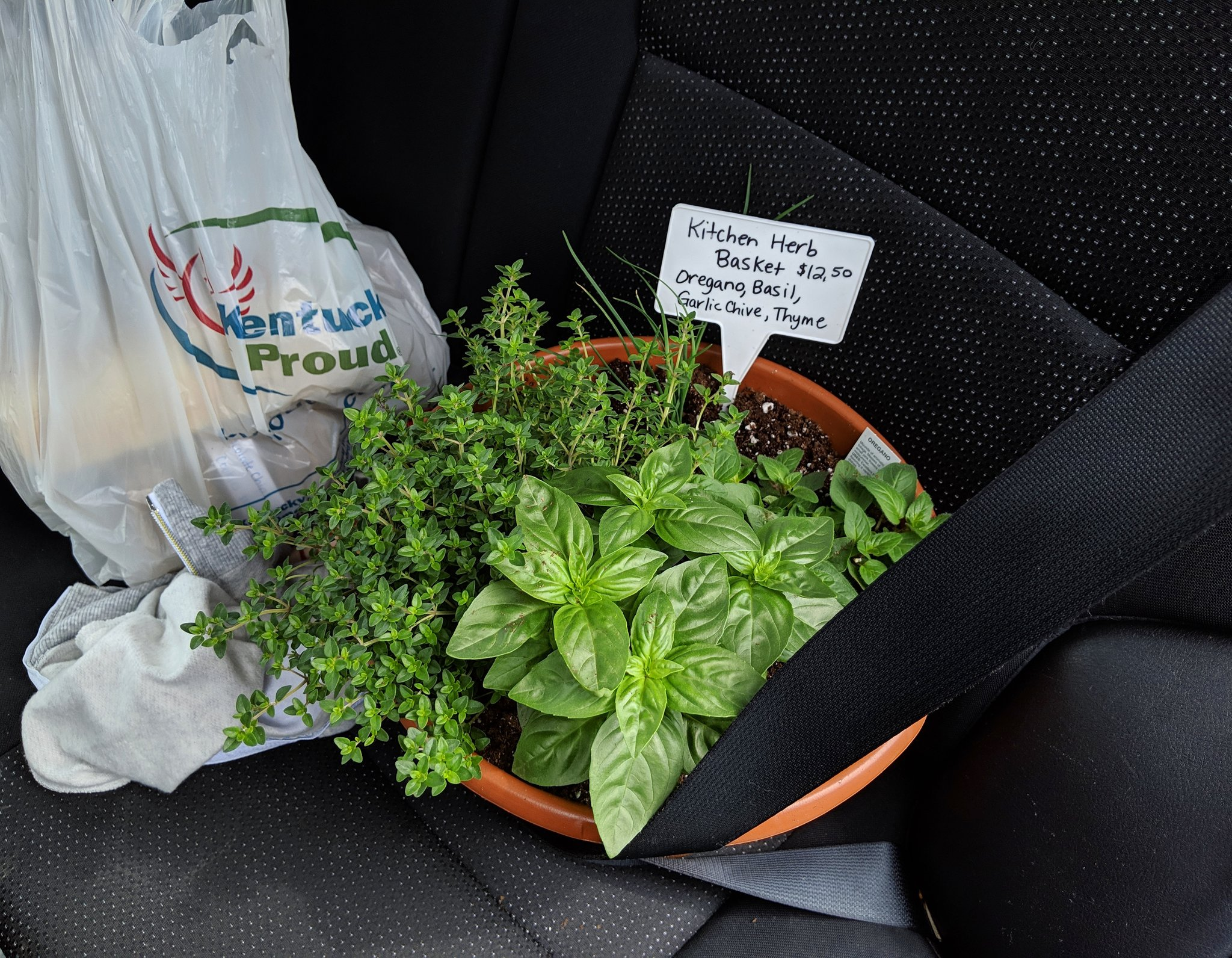 A pot of herbs from the Griffith Family Farm stand which has been secured with a seat belt inside a car. Next to the pot is a Kentucky Proud shopping bag.
