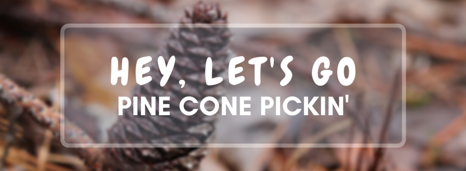 pine-cone-pickin-outdoor-photo-challenge-you-will-bee-fine